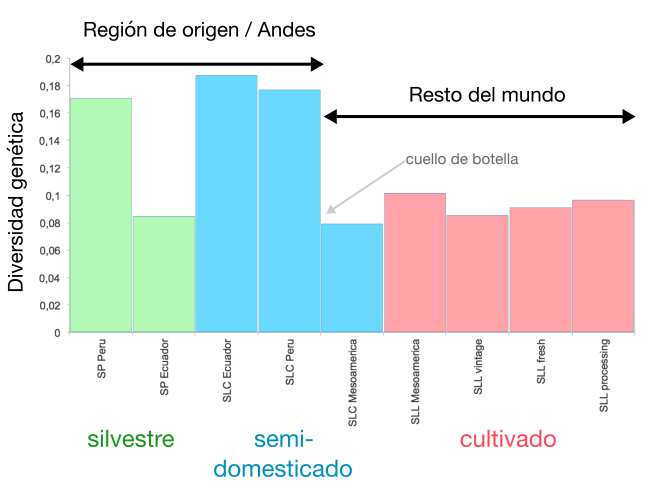 Pérdida de diversidad genética en la emigración fuera de los Andes